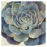 Succulence I - Mini Posters by Aime Wilson
