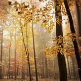 Autumn Blush Prints by Iris Lehnhardt