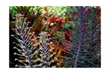 Tropical Garden Photographic Print by Herb Dickinson