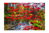 Garden State Spring Photographic Print by George Oze