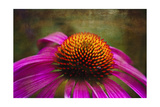 Purple Coneflower on Canvas Photographic Print by George Oze