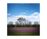 Landscape With Purple Flowers Photographic Print by Annmarie Young