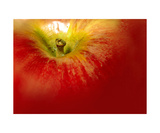 Red Apple Photograph Photographic Print by Annmarie Young