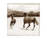 Running Horses Photographic Print by Annmarie Young