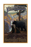 PAL 50 Yellowstone Black Bear Family Photographic Print by Paul A Lanquist