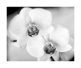 Orchids In Black And White Photographic Print by Annmarie Young