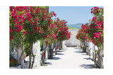 Garden Bloom, Villa Rufulo, Ravello, Italy Photographic Print by George Oze