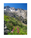 Peaks And Wildflowers From The High Sierra Trail Photographic Print by Ronald A Dahlquist