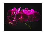 Purple Orchids with Painted Light Photographic Print by George Oze