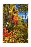 Coastal Forest Autumn Scenic, Maine Photographic Print by George Oze