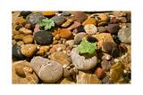 River Stones Photographic Print by Steve Gadomski