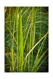 Blades of Grass on the Prairie Photographic Print by Steve Gadomski