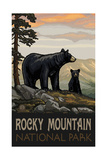 Black Bear Family Rocky Mountain National Park Photographic Print by Paul A Lanquist