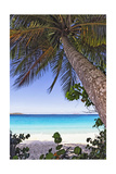 Leaning Palm, Trunk Bay, US Virgin Islands Photographic Print by George Oze
