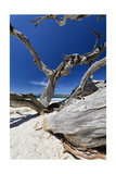 Carmel Beach Tree Branches, California Photographic Print by George Oze