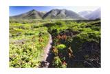 Coastal Path, Big Sur Coast, California Photographic Print by George Oze