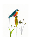 Bird and Honey Bee Print Photographic Print by Blenda Tyvoll