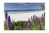 Carmel Beach Spring Vista, California Reproduction photographique par George Oze