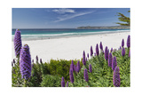 Carmel Beach Spring Vista, California Photographic Print by George Oze