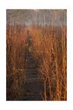Prairie Trail Photographic Print by Steve Gadomski