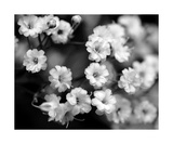 Black And White Photo Flowers Photographic Print by Annmarie Young