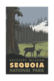Crescent Meadow- Sequoia National Park Pal 1235 Photographic Print by Paul A Lanquist