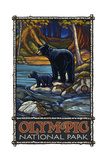 Black Bear Family Olympic National Park Photographic Print by Paul A Lanquist