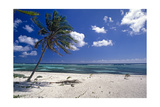 Palm Tree on a Beach, Brakers, Grand Cayman Photographic Print by George Oze