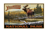 Yellowstone National Park Moose Pal 2453 Photographic Print by Paul A Lanquist