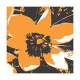 Blooming Orange Photographic Print by Herb Dickinson