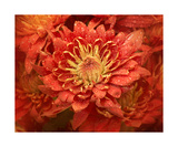 Flower With Dew Photographic Print by Annmarie Young