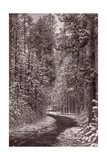 Mountain Trail Yellowstone BW Photographic Print by Steve Gadomski