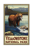 Grizzly with Fish Yellowstone National Park 777 Posters by Paul A Lanquist
