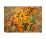 Flowers Photographic Print by Annmarie Young