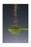 1 Tablespoon Celery Seed Photographic Print by Steve Gadomski
