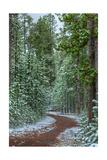 Mountain Trail Yellowstone Photographic Print by Steve Gadomski