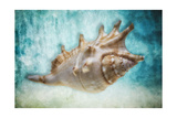 Aquatic Dreams I Photographic Print by George Oze