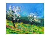 Orchard 564150 Photographic Print by  Ledent