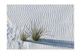 White Sands Grasses Photographic Print by Steve Gadomski