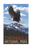 Denali National Park Soaring Eagle Pal 2181 Photographic Print by Paul A Lanquist