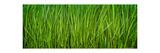 Prairie Grass Panorama Photographic Print by Steve Gadomski