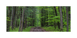 Manistee National Forest Michigan Photographic Print by Steve Gadomski