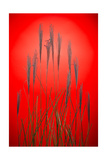 Fountain Grass In Red Photographic Print by Steve Gadomski