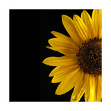 Sunflower Number 3 Photographic Print by Steve Gadomski