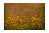 Prairie Wildflowers Photographic Print by Steve Gadomski
