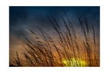 Prairie Grass Sunset Patterns Photographic Print by Steve Gadomski