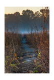 Wolf Road Prairie Trail Photographic Print by Steve Gadomski