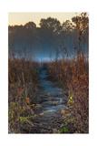 Wolf Road Prairie Trail Photographic Print by Steve Gadomski