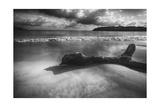 Driftwood on a Beach Reproduction photographique par George Oze