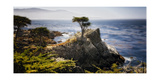 Lone Cypress Tree Photographic Print by George Oze